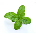 Mentha Oil Piperita